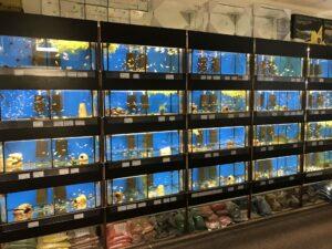 Akvaristika Osmančík, prodejna, mořská akvária